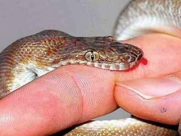 Mơ bị rắn cắn đánh con gì may mắn và có điềm báo gì?