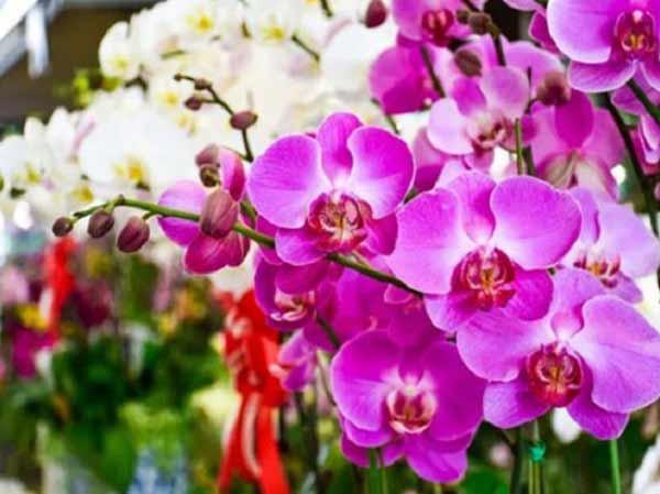 Nằm mộng thấy hoa lan nên đánh đề con gì