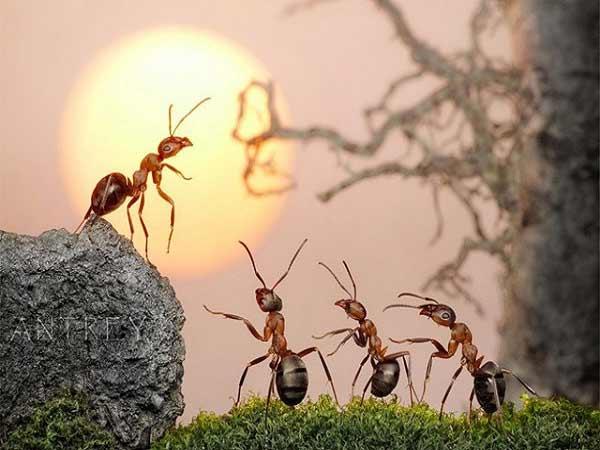 Mơ thấy kiến là điềm báo gì? Đánh con bao nhiêu?