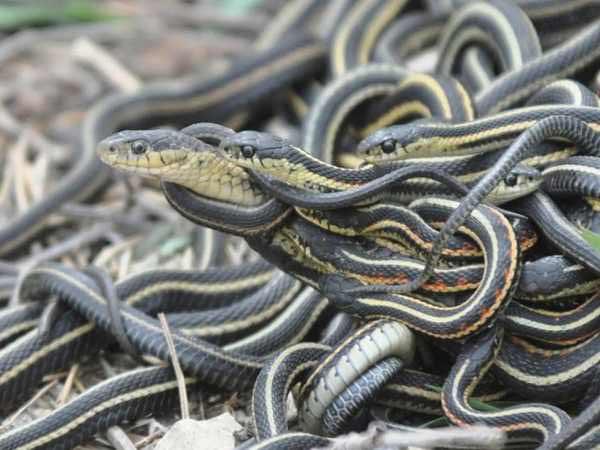 Chiêm bao thấy ba con rắn nên đánh lô đề con bao nhiêu để trúng lớn?
