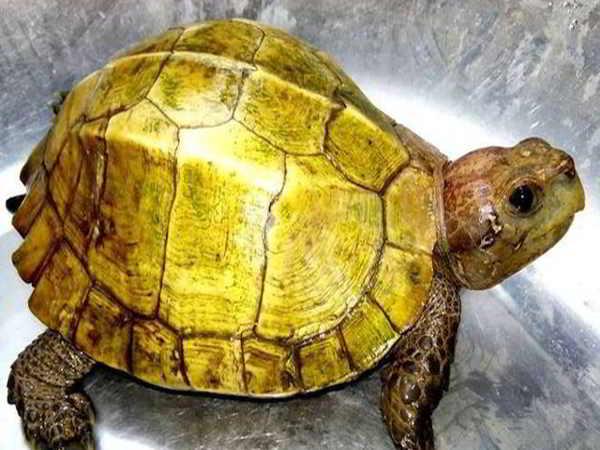 Mơ thấy rùa – Chiêm bao thấy rùa đánh con gì chuẩn xác