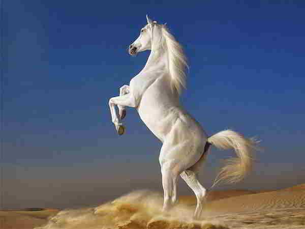 Ngủ mơ thấy con ngựa là điềm báo lành hay dữ ? Đánh số mấy ?