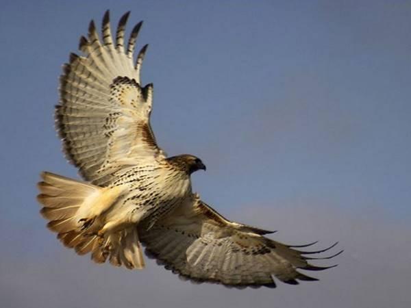Mơ thấy chim ưng đánh liền tay cặp số nào vào bờ?