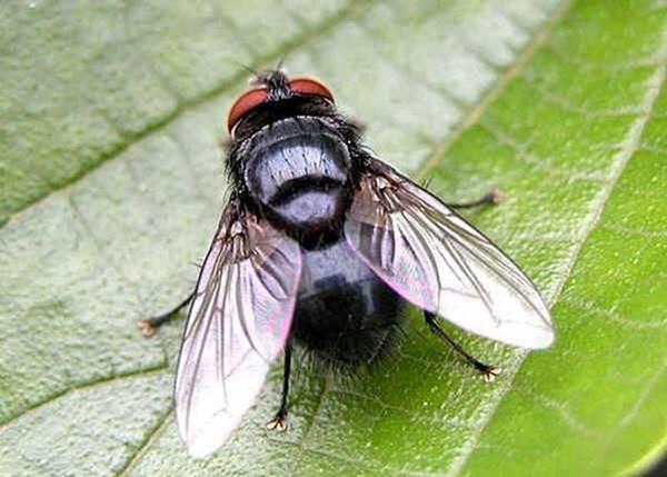 Nằm mơ thấy con ruồi là điềm báo gì đánh số mấy