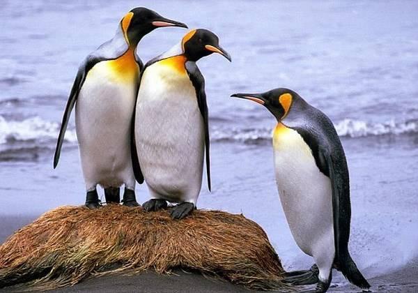Giải mã giấc mơ thấy chim cánh cụt là điềm báo gì? Đánh số mấy