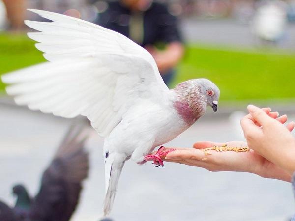 Nằm mơ thấy chim đánh con gì? Điềm báo giấc mơ